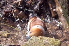 Костогриз купається в джерелі