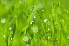 Травы Хортицы весной